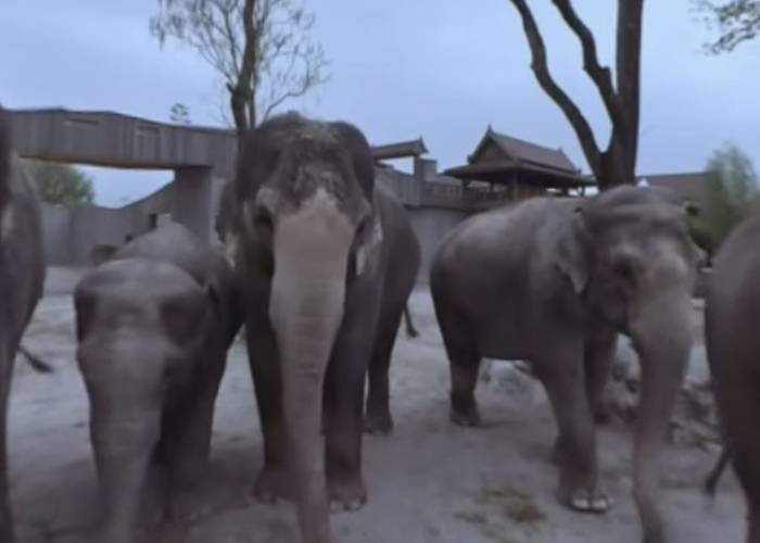 Zirkus Knie: Meet the Elephants